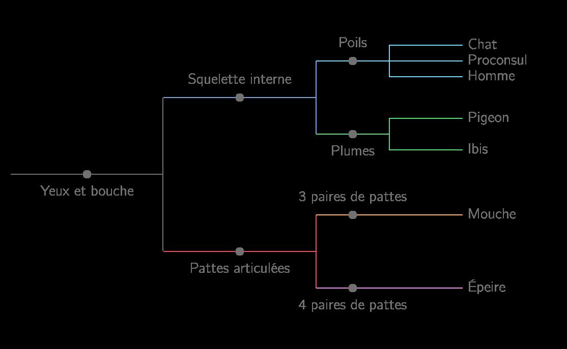 Arbre phylogénétique des animaux