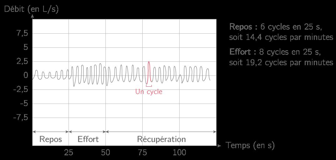 Enregistrement de l'activité ventilatoire d'un élève au cours d'un exercice modéré