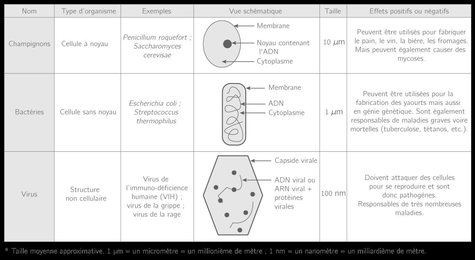 Les trois groupes de micro-organismes