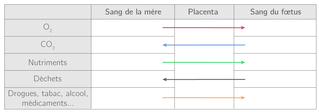 Les échanges à travers le placenta entre la mère et le fœtus