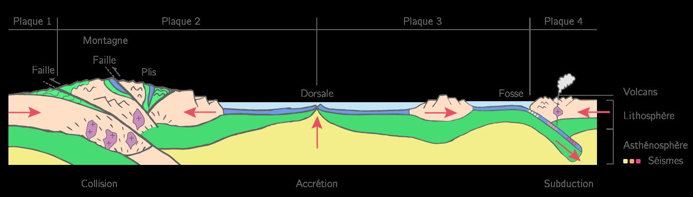 Les mouvements des plaques lithosphériques