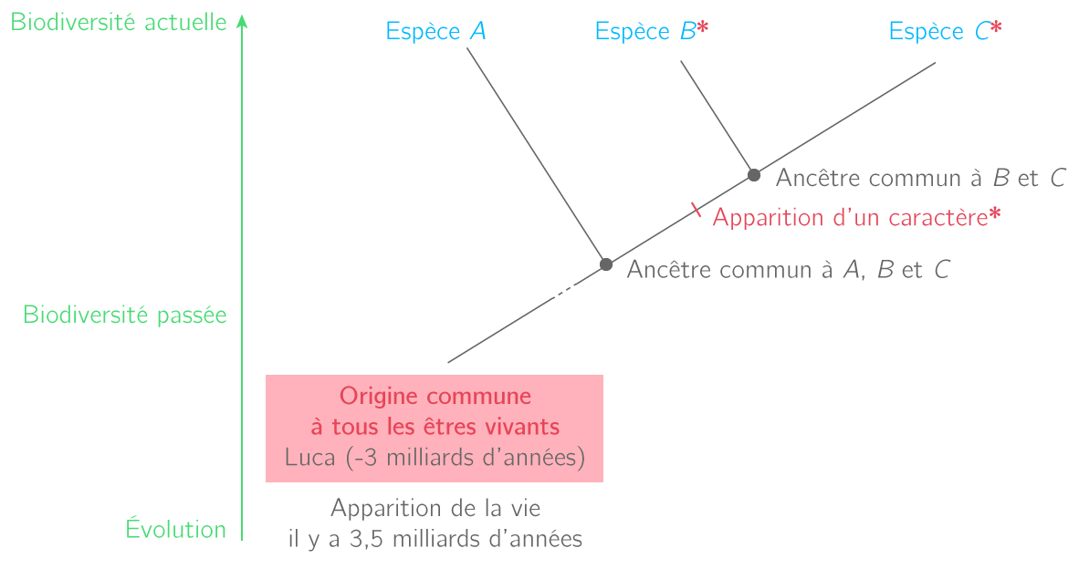 L'évolution des espèces et représentation sous forme d'arbre phylogénétique
