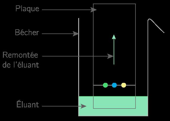 Kartable 2nde physique chimie cours extraction s paration et identification d 39 esp ces - Chromatographie sur couche mince ...