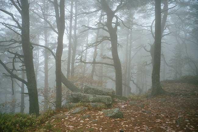 Forêt du mont Sainte-Odiel, Alsace, France