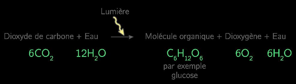 Équation bilan de la photosynthèse non simplifiée
