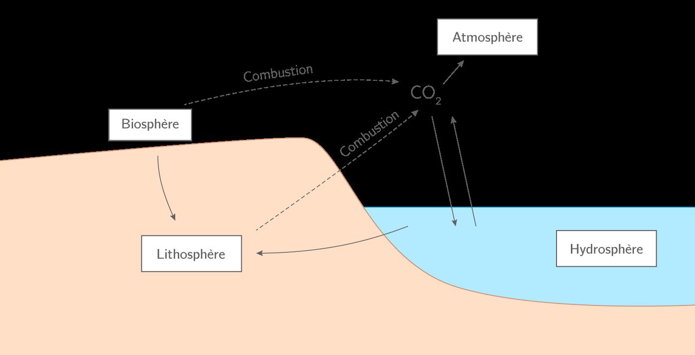 L'influence de l'activité humaine sur le cycle du carbone