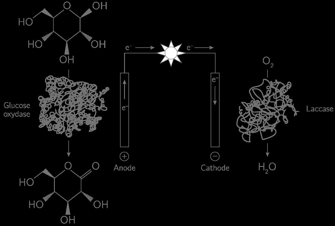 Schéma du principe de fonctionnement de la biopile au glucose