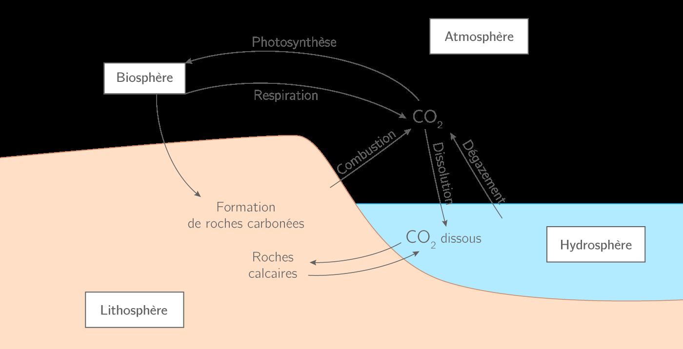 Le cycle naturel du carbone