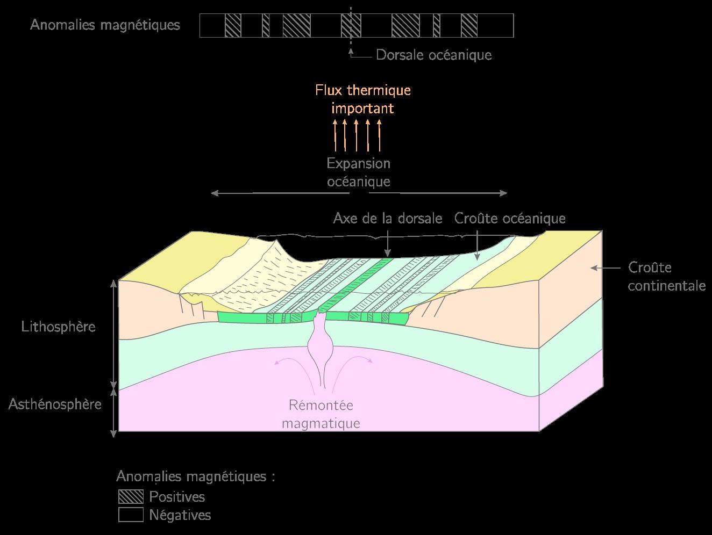 Schéma de l'expansion océanique