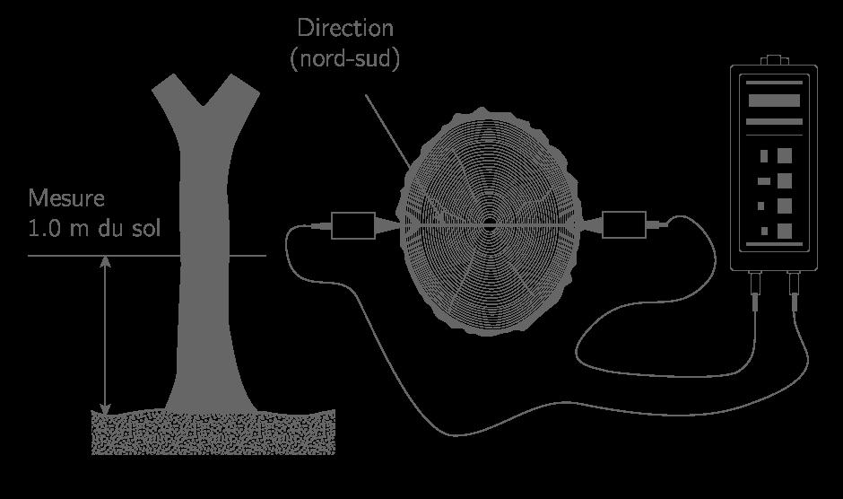 Principe de mesure de dégradation du bois d'un tronc par méthode non destructive