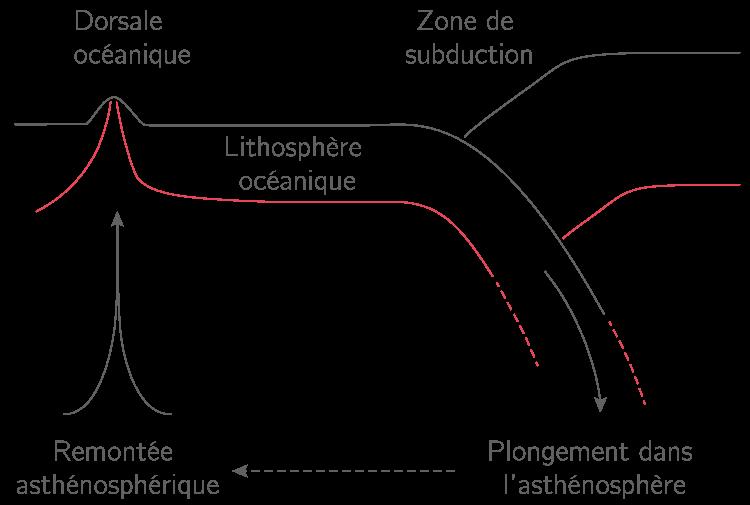 Le renouvellement de la lithosphère océanique