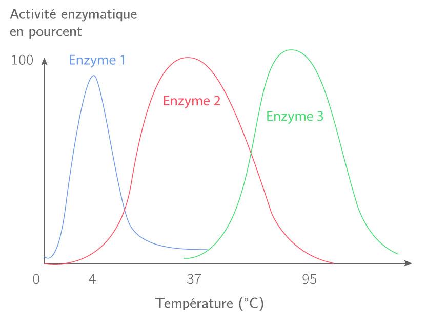 Schématisation des températures de fonctionnement de trois enzymes