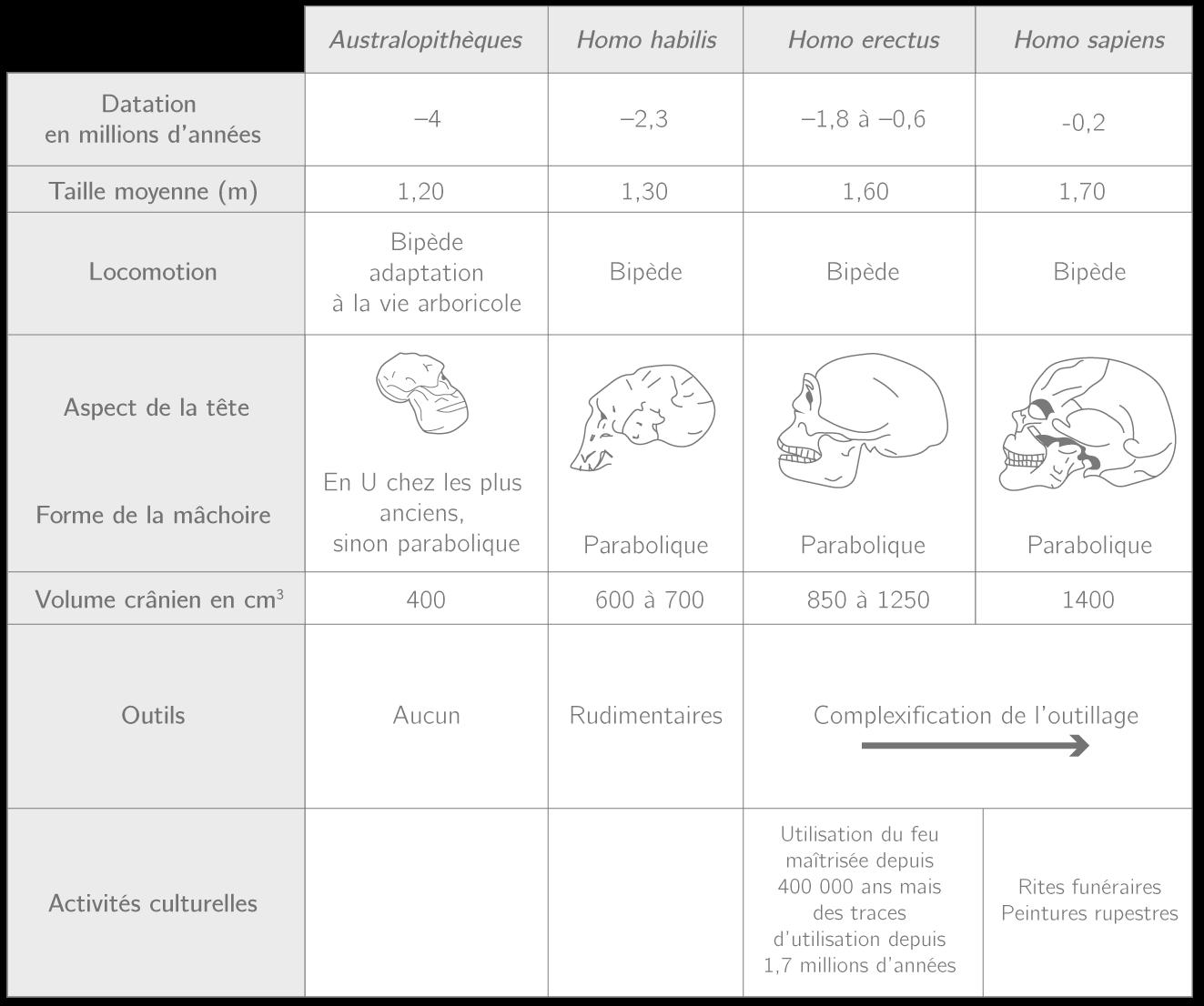 Les caractéristiques de quelques membres de la lignée humaine