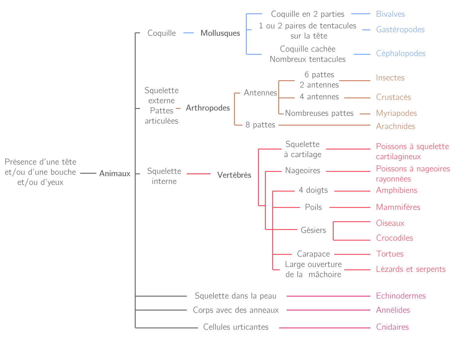 Classification des animaux sous forme d'arbre de parenté