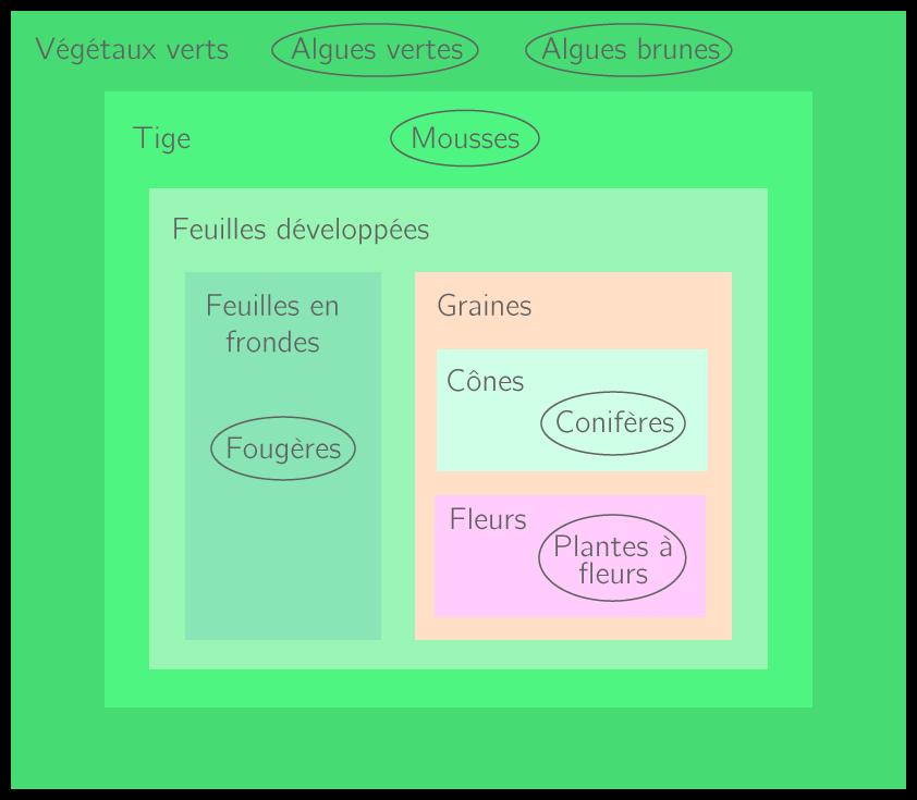 Classification des végétaux sous forme de groupes emboîtés