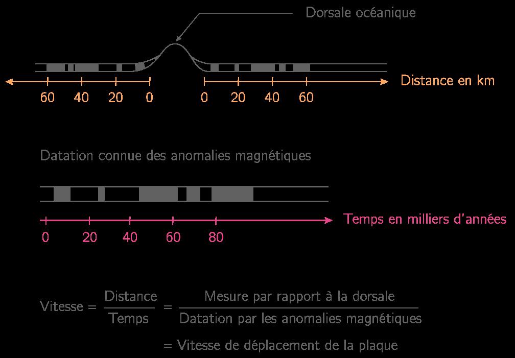 La vitesse de déplacement de la lithosphère océanique par les données paléomagnétiques