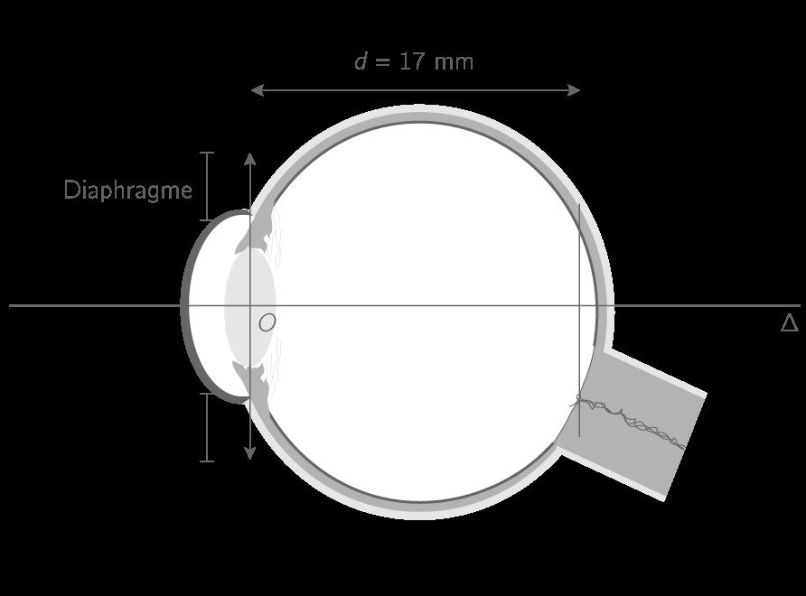 Modélisation optique d'un œil