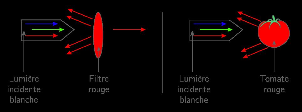 Diffusion et transmission de la lumière blanche par deux objets rouges