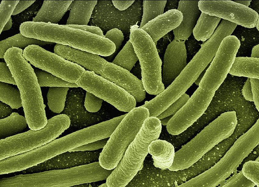 Photographie de cellules bactériennes