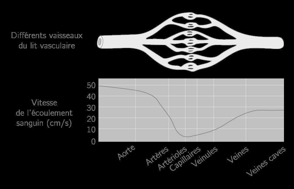 Figure 2. Vitesse moyenne du sang dans différents vaisseaux sanguins.