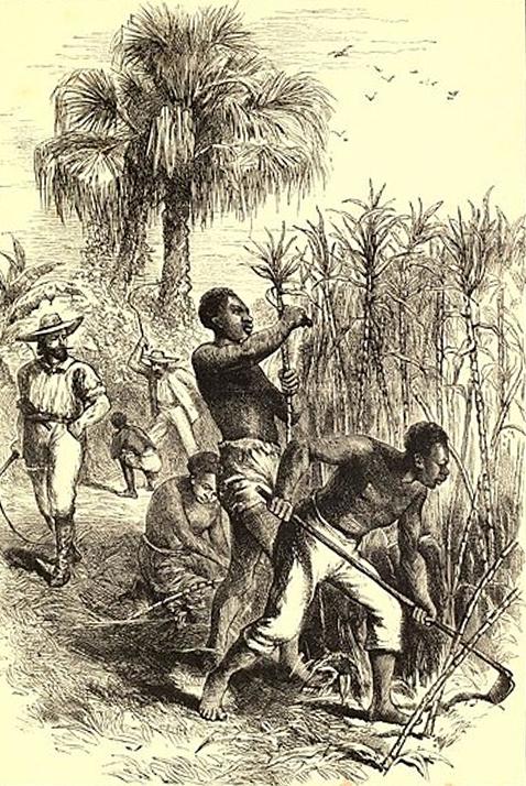 Esclaves travaillant sur une plantation