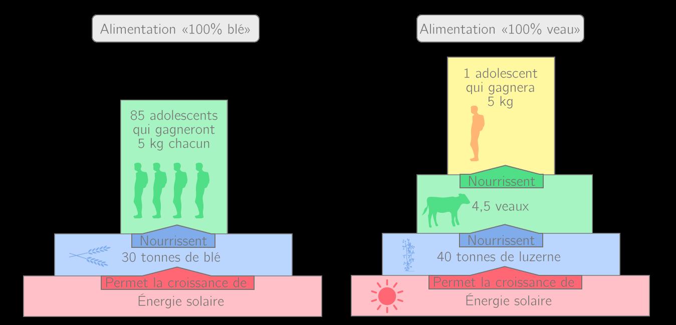 Mise en évidence de la perte d'énergie en ajoutant un niveau à la pyramide écologique