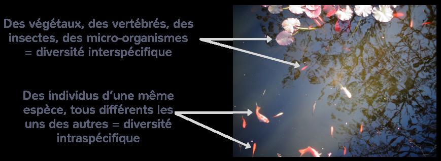 La biodiversité dans un écosystème