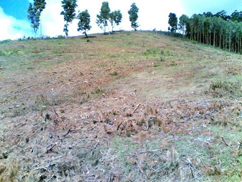 Déforestation en Tanzanie: les sols mis à nu seront rapidement érodés.