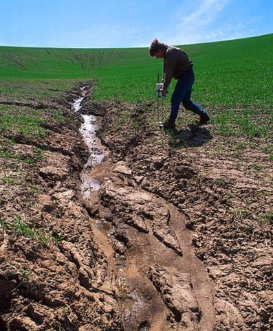 Érosion d'un sol agricole par les eaux du ruissellement