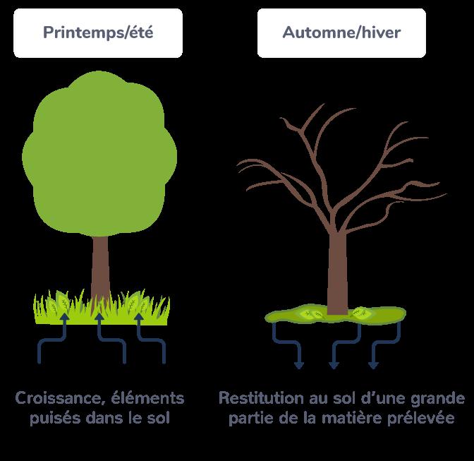 Équilibre dans un écosystème naturel