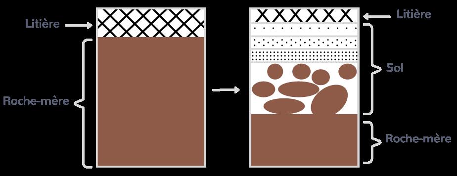 La formation d'un sol