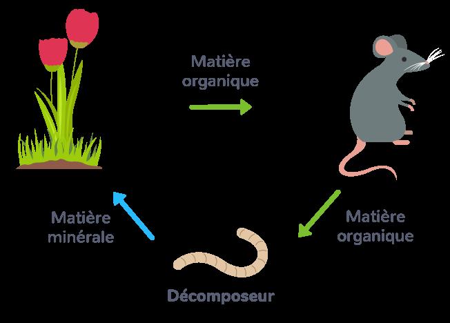 Le cycle de la matière