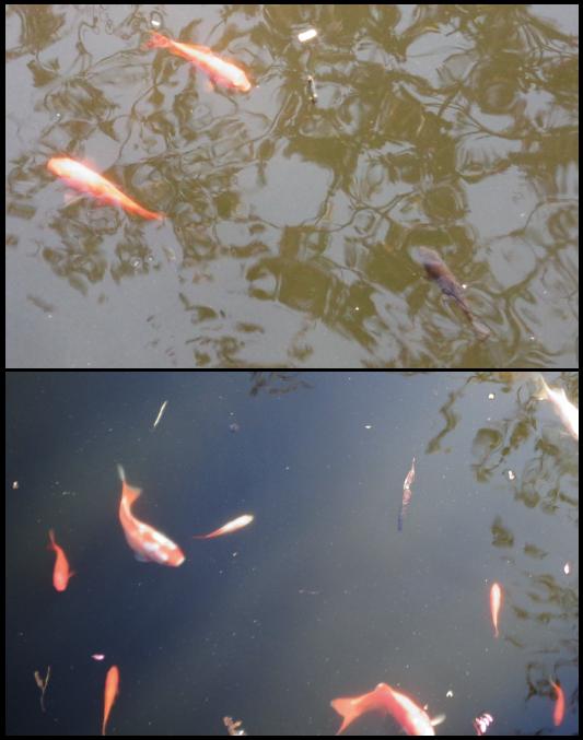 Comparaison d'une population de poissons à deux moments différents