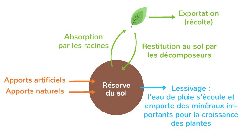 Les échanges d'azote entre le sol, la biosphère et l'atmosphère