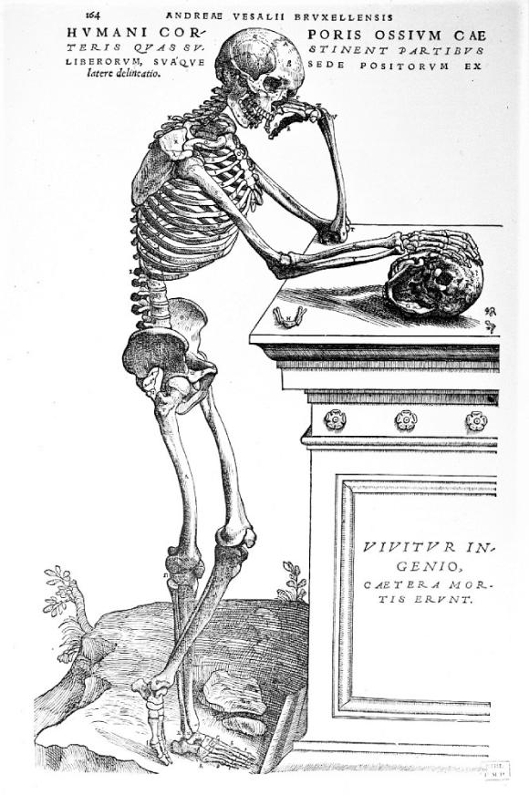 Une planche anatomique de Vésale