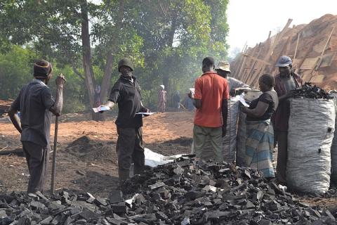 Production de charbon de bois à Yamoussoukro en Côte d'Ivoire