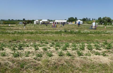 Les opposants au projet d'EuropaCity installent des potagers sur le site pour dénoncer la disparition des paysages agricoles.