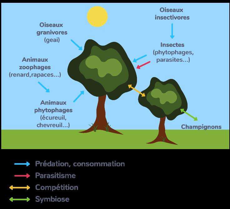 Des interactions variées entre espèces au sein d'une forêt