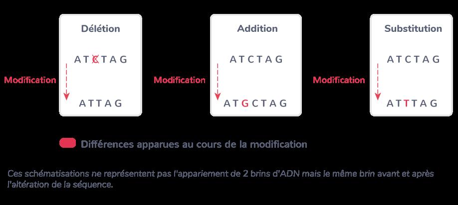 Les différents types de mutation