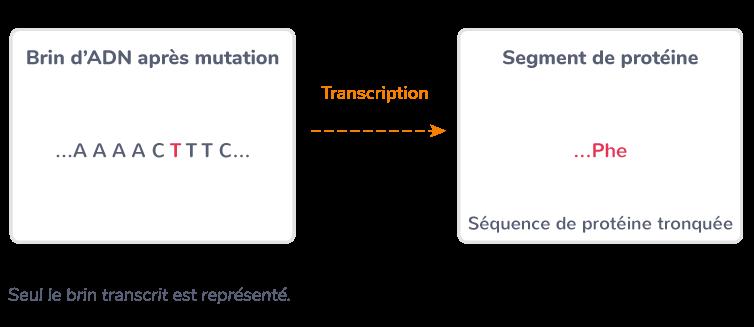 Exemple de mutation non-sens