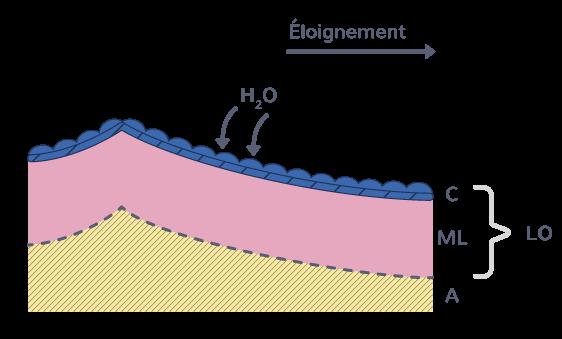 Vieillissement du plancher océanique: en s'éloignant de la dorsale, la lithosphère océanique s'épaissit et s'enfonce dans l'asthénosphère (A). Il subit une hydratation.(C: croûte; ML: manteau lithosphérique; A: asthénosphère; LO: lithosphère océanique)