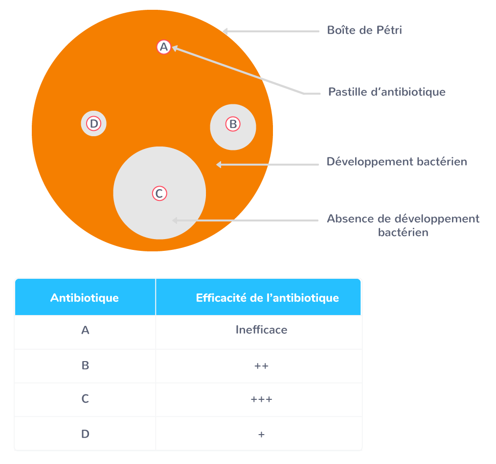 Résultats d'un antibiogramme
