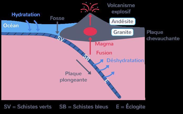 Magmatisme au niveau d'une zone de subduction