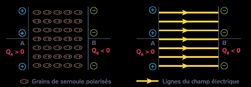 Cartographie du champ électrostatique existant dans un condensateur plan