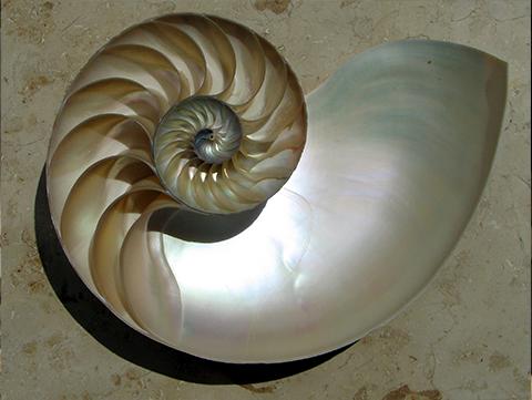 Coquille de nautile (mollusque)