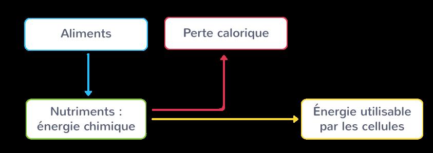 Production d'énergie à partir des aliments