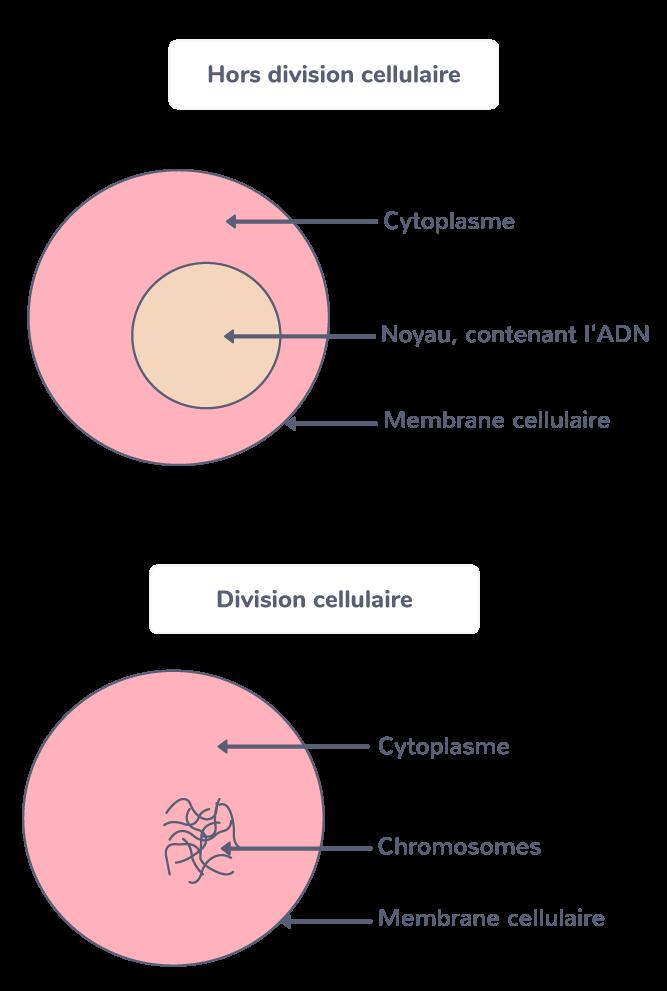 Les caractéristiques d'une cellule