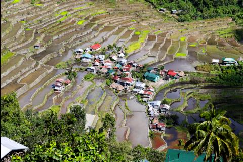 Rizières dans les Philippines