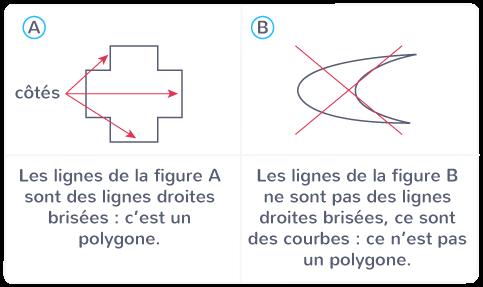 côtés polygone lignes droites brisées