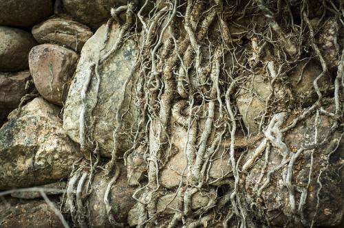 altération roches fissures racines
